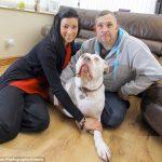 Una pareja recién casada cancela su luna de miel en Las Vegas para pagar el tratamiento de cáncer de su perro