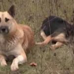 Un perro vigila el cuerpo de su amigo muerto durante más de una semana cerca de una carretera en Rusia