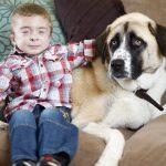 Un perro con tres patas adoptado ayuda a un niño con su enfermedad y a superar el miedo al mundo exterior