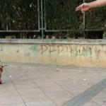 Un perro que parece sacado del Circo del Sol