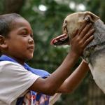 Kabang, el perro que se quedó sin hocico al arriesgar su vida para salvar a dos niñas, recibirá un tratamiento para recuperarlo