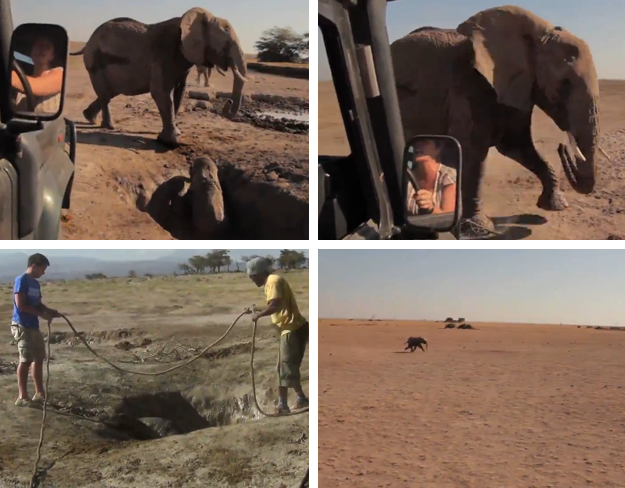 Una cría de elefante es rescatada y devuelta con su madre. El reencuentro es maravilloso