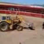 Excavadora persiguiendo a un toro en una plaza de Albacete