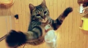 Un gato saltando dos metros a cámara lenta
