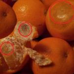La venta de cítricos españoles en Noruega podría paralizarse tras descubrirse que los drogadictos limpian sus jeringuillas pinchando las mandarinas de los supermercados