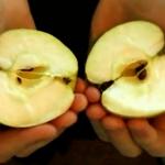 Cómo romper una manzana por la mitad con las manos