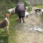 Una mujer salva la vida de un zorro que estaba siendo atacado por un grupo de perros durante una cacería