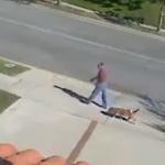 Un perro va dejando un rastro de caca mientras pasea sin que su dueño se de cuenta