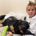 Un perro salva a un niño empujándolo para sacarlo de la trayectoria por la que iba un camión