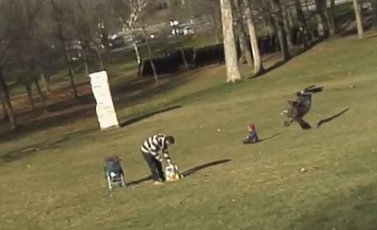 Un hombre graba como un águila real intenta robar a un bebé en Canadá
