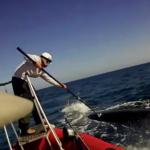 Cabalgar sobre una ballena azul