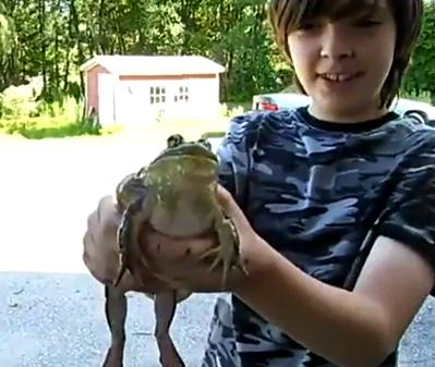 La rana que se comió un gato y lo tiene en su interior todavía con vida