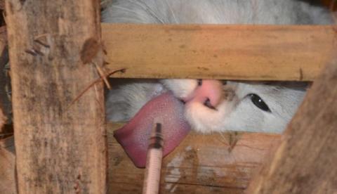 Voluntarios chinos rescatan a 1.000 gatos que encontraron atrapados en cajas durante el accidente del camión que los transportaba