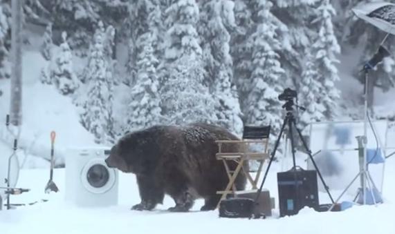 Cuando un oso te sorprende en mitad de un rodaje