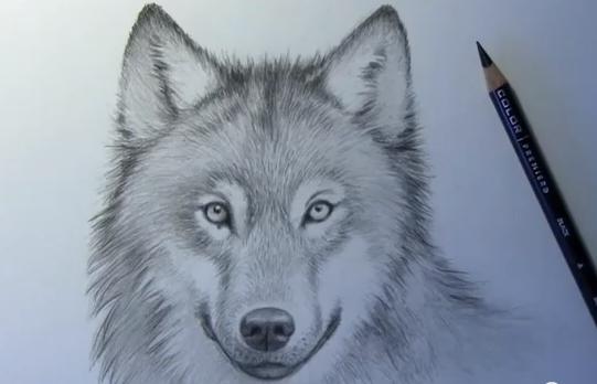 Mark Crilley Así Se Dibuja Un Lobo