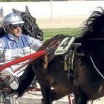Un hombre mata a su caballo por quedar eliminado de una carrera