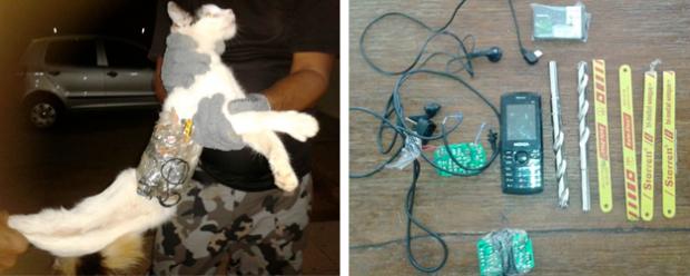 Capturan a un gato que servía como mensajero a los presos de una cárcel de Brasil