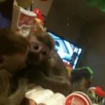 Un mono ve su reflejo por primera vez