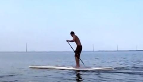 Esto es lo que ocurre cuando un paddle boarder se acerca demasiado a los manatíes