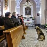 Ciccio, el perro que acude a la iglesia todos los días para esperar a que vuelva su dueña fallecida