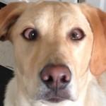 Un perro hace el truco de cruzar los ojos