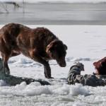 Un perro permanece junto a su dueño caído en un lago helado hasta que llega el equipo de rescate