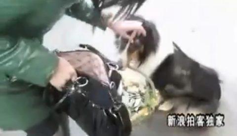 Un perro recauda cada día en la calle unos 120 euros para su dueño