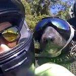 Una pareja monta con su perro en una Yamaha R6