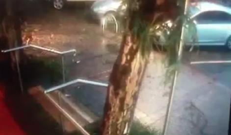 Mueve el coche segundos antes de que caiga el árbol