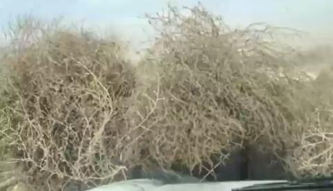 Ataque de estepicursores un día de viento en Texas