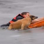 Un perro salvado de morir en un estanque helado