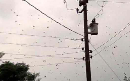 Lluvia de arañas en Brasil