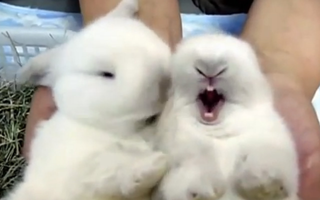 Los animales más adorables del mundo. Te derretirás