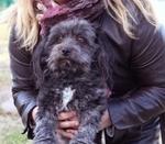 Salvan la vida de una perra que apareció abierta en canal en la puerta de la asociación L'Última Llar en Tarragona