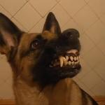 Un perro cambia de estado de ánimo en cuestión de segundos