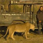 El fotógrafo Graham Springer se lleva el susto de su vida cuando una leona se le acerca a olerle