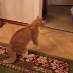 Un gato llora después de que su compañero le meta una bofetada