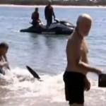 Un hombre que ayudó a un tiburón a volver al mar en una playa es despedido de su trabajo