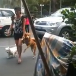 Un perro agarra la mano de su dueña antes de cruzar una calle