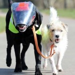Un perro se convierte en el guía de su amigo labrador ciego