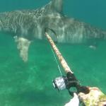 Estaba haciendo pesca submarina tranquilamente cuando un tiburón tigre apareció en escena