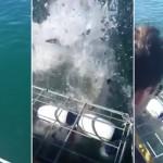 Un tiburón ataca una jaula en la que había unos turistas dentro contemplando a los escualos en su hábitat natural