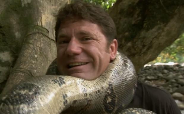 Comprobando la fuerza de una Boa constrictor con su propio cuello