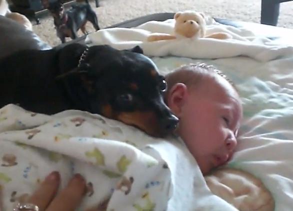 El perro que no quiere que despierten al bebé