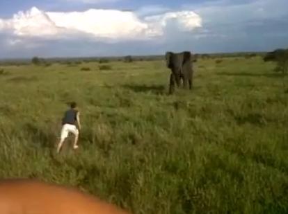 Un hombre borracho se baja del coche en un safari para asustar a un elefante