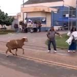"""Una """"cabra toro"""" embiste a los viandantes de una zona de Brasil"""