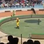 Denunciamos que un zoo de China obliga a un oso y a unos monos a hacer una carrera en bicicleta