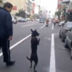 Un hombre obliga a su perro a caminar sobre dos patas como si fuera un humano