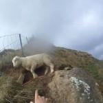 Un grupo de excursionistas rescata a una oveja atrapada en una valla de un monte en Nueva Zelanda