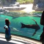 Un león marino preocupado por una niña